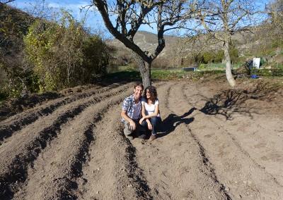 Cultivo Quinoa